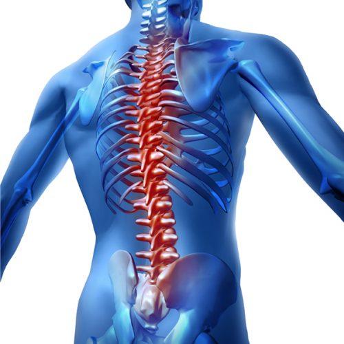 הקשר בין החוליות האברים בגוף והסימפטומים